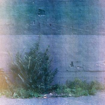 11_ville_sauvage